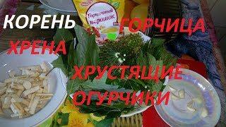 Огурцы с корнем хрена и горчицей- лучший рецепт