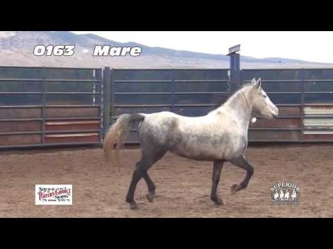 Extreme Mustang Makeover Auction Preview