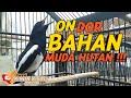 Suara Kacer Bahan Muda Hutan Konslet Gacor Pedas Langsung On Dor  Mp3 - Mp4 Download