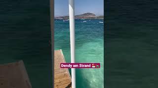 DENDY MACHT URLAUB AM STRAND 🏖🐢 #shorts