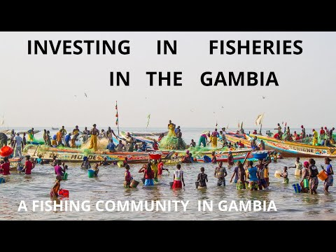 INVESTING IN FISHERIES IN THE GAMBIA