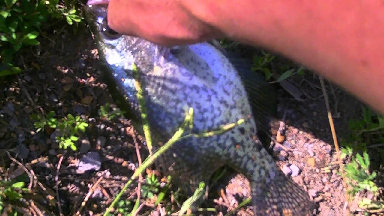 Crappie fishing in alabama youtube for Crappie fishing in alabama