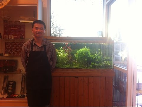 Aquarium Basics, Henry's tank at Hong Kong Market. Aquarium Hunters