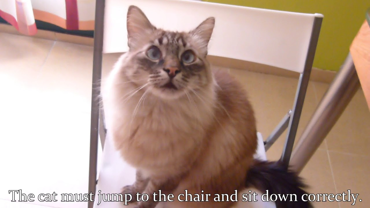 Concurso How to 16 · Home skills · How to make a cat happy