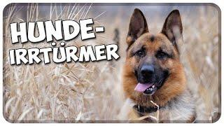Die größten Hunde-Irrtümer! Die häufigsten Irrtümer und Märchen über Hunde!