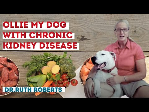 Ollie My Dog With Chronic Kidney Disease