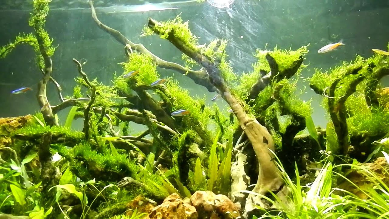 Image gallery driftwood aquascaping - Gallery aquascape ...