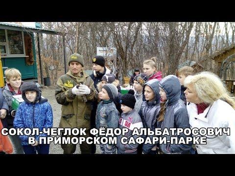 СОКОЛ-ЧЕГЛОК ФЁДОР АЛЬБАТРОСОВИЧ В ПРИМОРСКОМ САФАРИ-ПАРКЕ