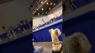 Houston world series dog show