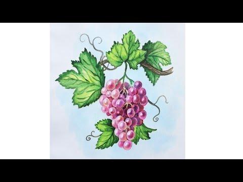 Как нарисовать гроздь винограда карандашом