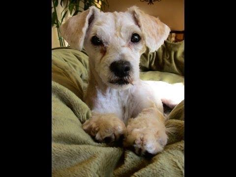 Edie is adopted update. Bronwyne Mirkovich.