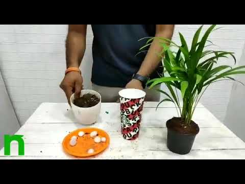 Thing I Do For Green | Reuse Waste Paper Cup | nurserylive - YouTube