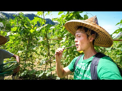 Eating WILD FERN 🌿 + Spicy Thai Vegan Food!! 🌶️ | Our Jungle Camp, Thailand