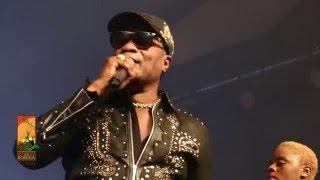 Koffi Olomide performs Effrakata   Live at The Koroga Festival