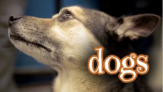 Urban Wildlife. Dogs  | Documentary | Science Channel
