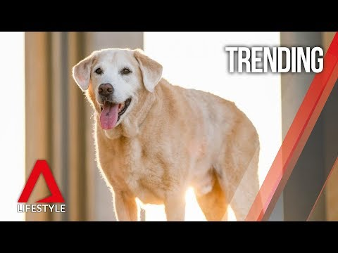 Remembering Flapper, Singapore's canine star | CNA Lifestyle from YouTube · Duration:  2 minutes 43 seconds