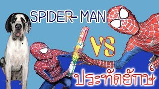 SPIDER MAN สไปเดอร์แมน vs ประทัดยักษ์ แต่เจอของดี เล่นยังไงให้ เจ็บน้อยที่สุด l ละครสั้น