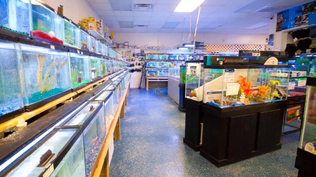 Fish aquarium business -  Virtual Tour Commercial Fish Aquarium Business For Sale
