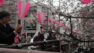 東京お花見散歩 中目黒 目黒川の桜 2018.3.22  Sakura thumbnail