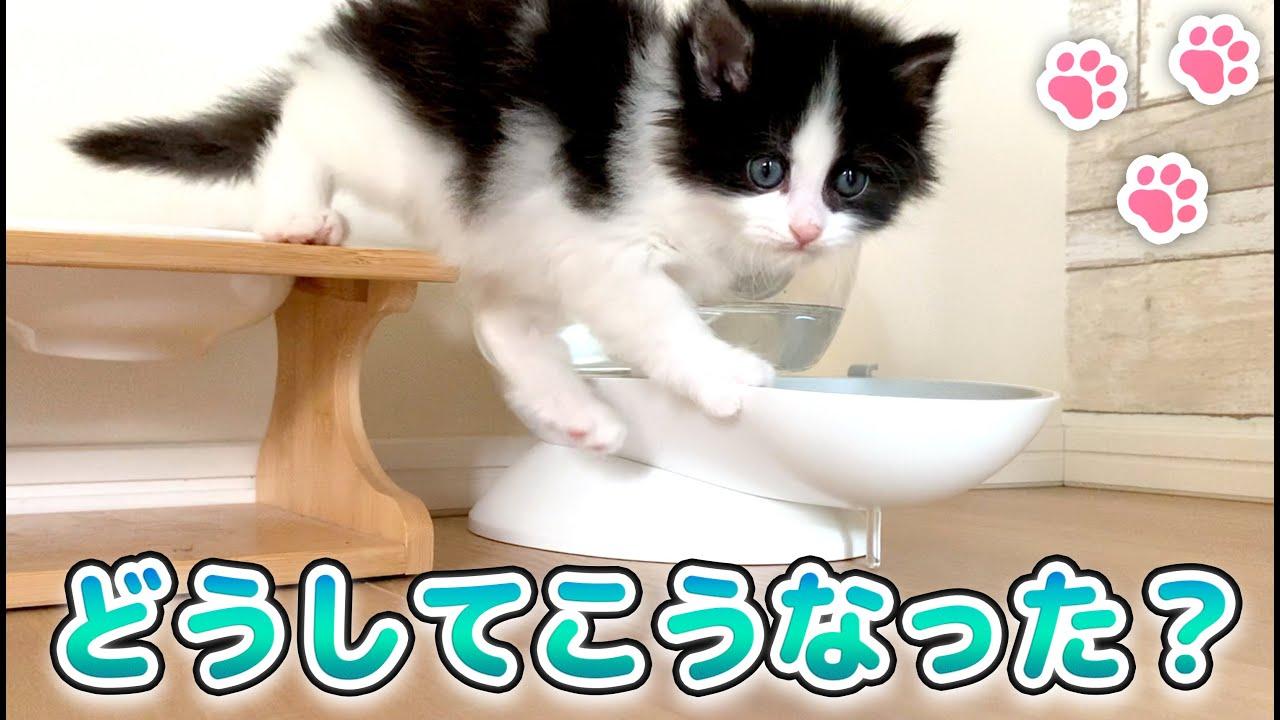 【保護ネコ】難易度高めな水の飲み方をする子猫...笑