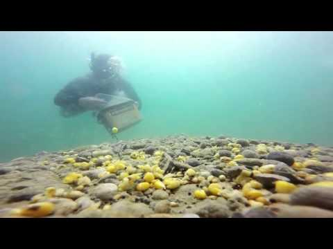 ловля карпа подо  водой