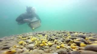 Рыбалка, красивая съёмка карпов под водой, ловля на фидер и метод,карпфишинг(Красивая съёмка карпов под водой, ловля на фидер и метод, карпфишинг. Ссилка на канал https://www.youtube.com/channel/UC5zKByFqM..., 2016-04-06T16:48:40.000Z)