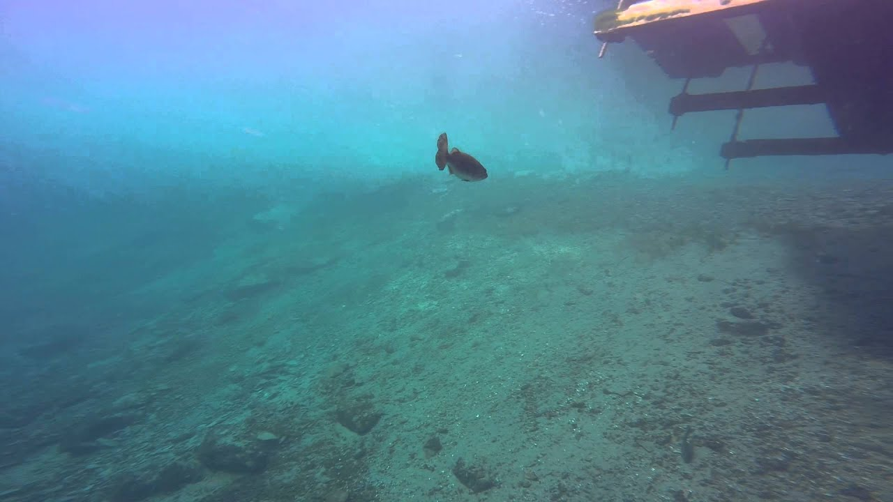Scuba Diving Certification Ocean County Nj Youtube
