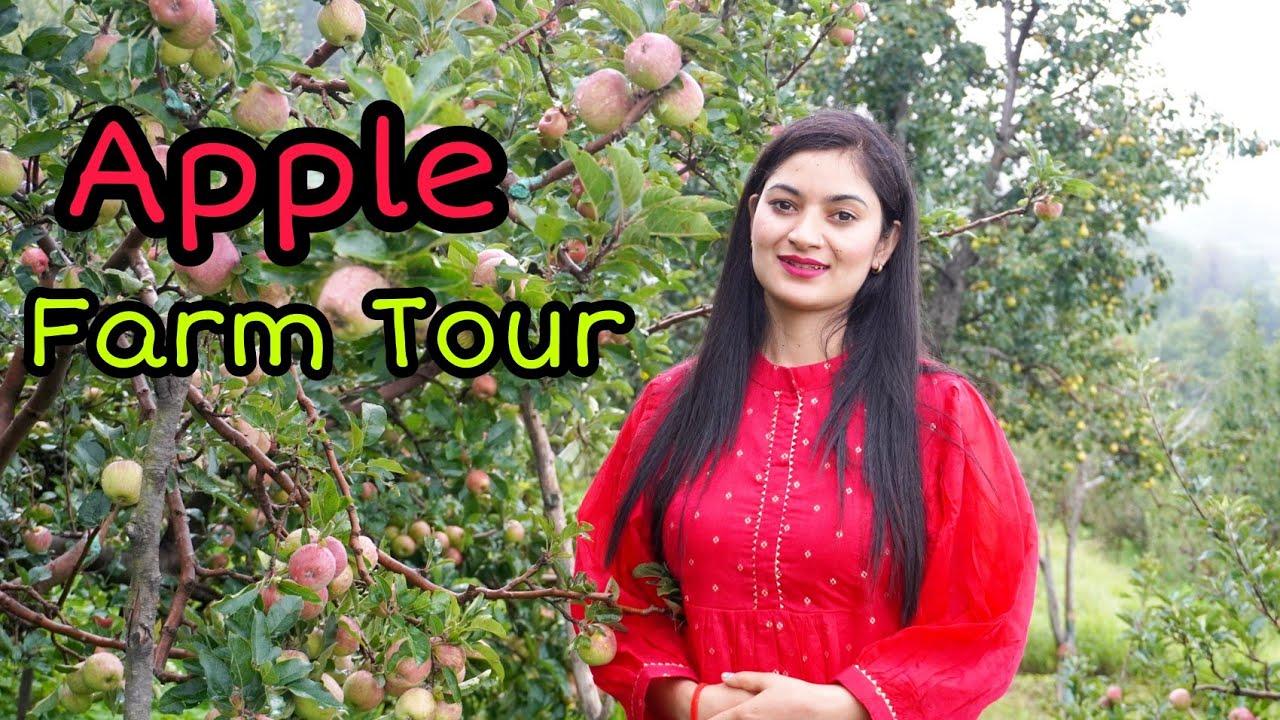 Apple Farm Tour in Shimla   Mountain Girl