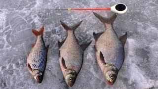 Ловля подлещика на реке зимой Рыбалка 2020