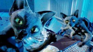 사악한 고양이들이 인간 몰래 세계 정복을 꿈꾸고 있다