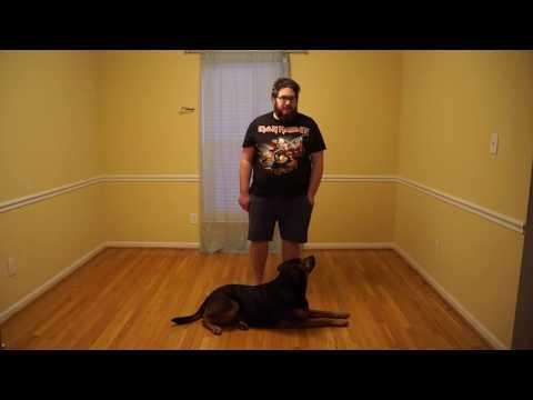 dog-training---leave-it-command