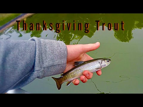 Calabogie Brook Trout Fishing