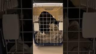 [밤이로그] 이동장 훈련 중인 고양이