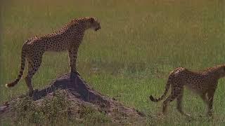Животные в естественной среде.