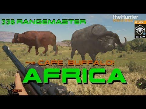 Should you use The 338 Rangemaster on CAPE BUFFALO!!? Call of the WILD THEHUNTER 2018