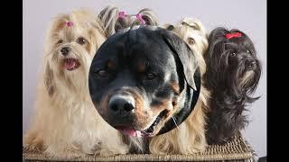 Сколько живут разные породы собаки !