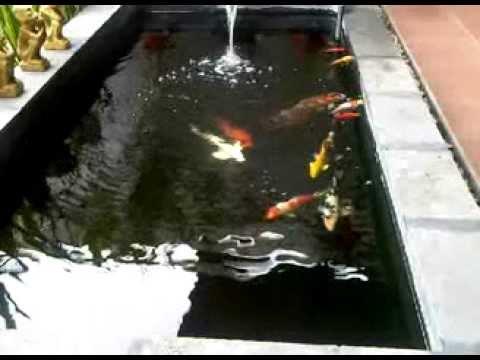 kolam koi kecil youtube