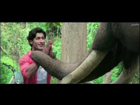 Download Junglee full movie | junglee movie trailer | nicheya official trailer | vidyut jammwal |