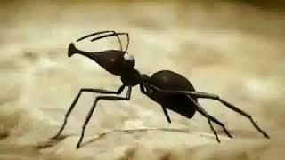 WAPBOM COM   Kisah penuh inspirasi tentang semut   Motivasi