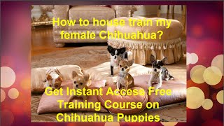How to house train my female Chihuahua? Get Instant Access Free Training Course on Chihuahua Puppies