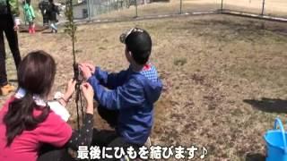 2014年4月20日、岩手県野田村で、「桜の植樹&My Little Lover acoakko ...