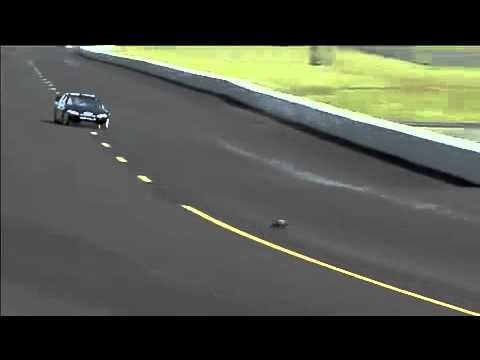 Groundhog Gets Hit By A Car In Race