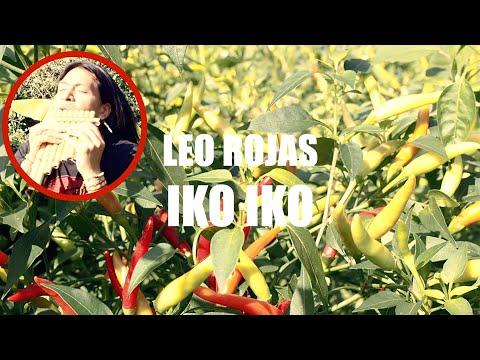 Смотреть клип Leo Rojas - Iko Iko