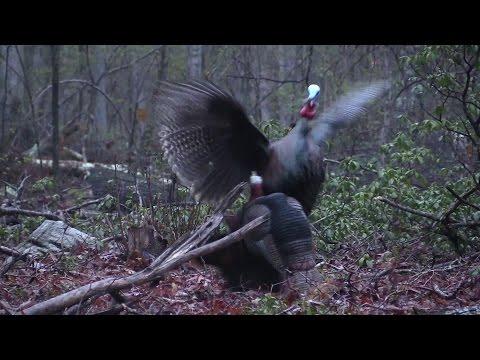 AWESOME Public Land, Rainy Day, Decoy Beatin' Turkey Hunt!