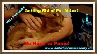 Rabbit Husbandry - Fur Mites, What It Looks Like and How We Treat It.mp4