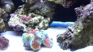My Triton Reef Tank