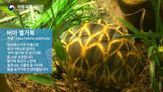 특별전 [양서파충류] 버마 별거북