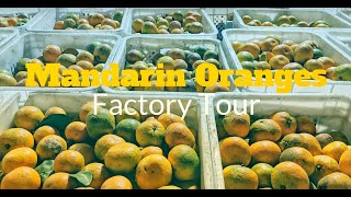 Mandarin Orange Factory