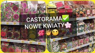 Castorama Kwiaty Cebulowe Mieczyk Dalia Lilia Irys Frezja Jaskier Przeceny Odc 1310 Youtube