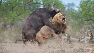 10 Сумасшедших Битв Животных